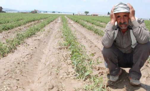 Tarım ipotek altında: 2 milyon çiftçinin tarım arazisi ipotekli