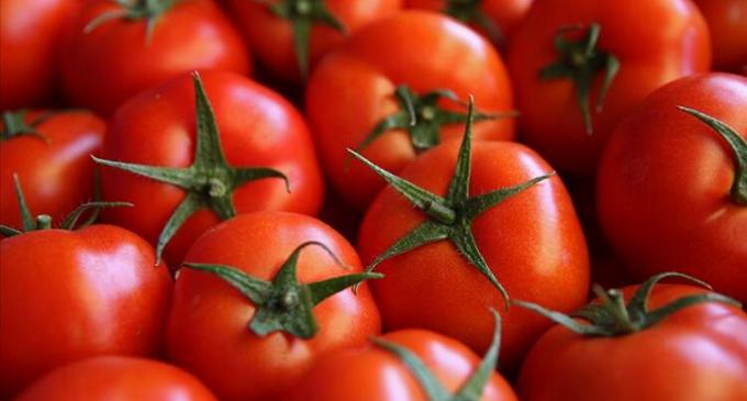 Rusya'dan Türkiye'den alınan domateslerle ilgili açıklama: Virüs görüldü
