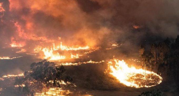 Avustralya'nın kâr odaklı mahşeri: Aylardır süren yangınların perde arkasında ne var?