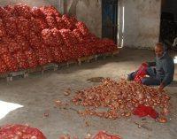 Terörist ilan edilen çiftçilerin isyanı: 250 bin ton soğan depoda çürüyor