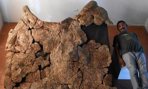 Dünyanın en büyük kaplumbağasının kabuğu bulundu