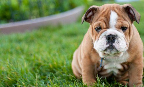 Hayvan satışlarında büyük artış: Sokağa çıkabilmek için köpek satın alıyorlar