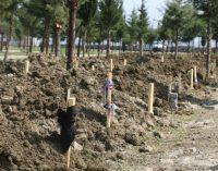MA: Covid-19'dan yaşamını yitiren 3 bin 108 kişi dört mezarlığa defnedildi