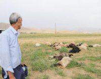 Yıldırım can aldı: Bir kişi yaşamını yitirdi, 19 koyun telef oldu