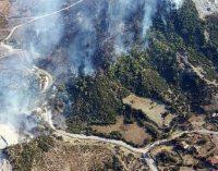 Aliağa'daki orman yangını söndürüldü: Yaklaşık 5 dönümlük ormanlık alan zarar gördü