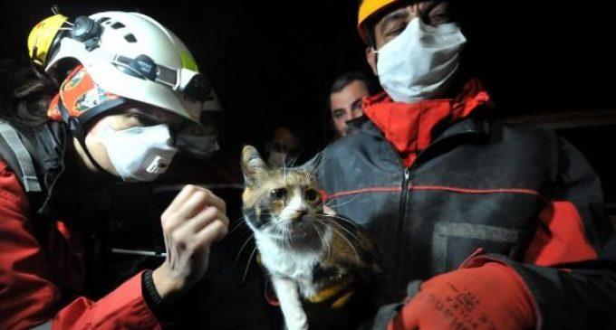 29 saatin ardından enkazdan arama köpeğinin bulduğu kedi kurtarıldı: 'Umut' ismi verildi