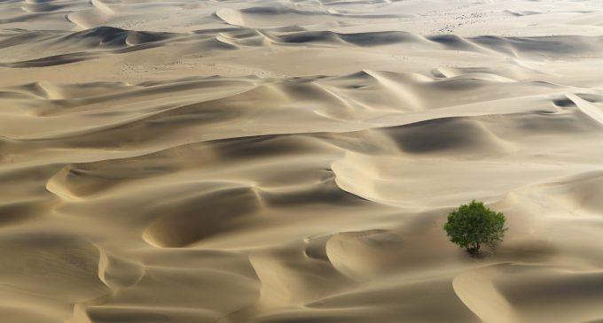 Yeni uydu araştırması: Afrika çölleri aslında milyarlarca ağaçla dolu