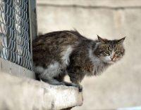 Vicdansızlık: Çanakkale'de 30 kedi ve köpek zehirlendi