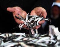 """""""Denizlere karışan uyuşturucular balıkları bağımlı yapıyor"""""""