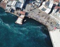 İstanbul Boğazı binlerce denizanası tarafından istilaya uğradı