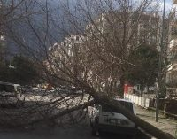 İzmir'de etkili fırtına: Ağaçlar devrildi çatılar uçtu araçlar zarar gördü