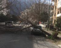 İzmir'de fırtına: Çatılar uçtu, ağaçlar devrildi, araçlar zarar gördü