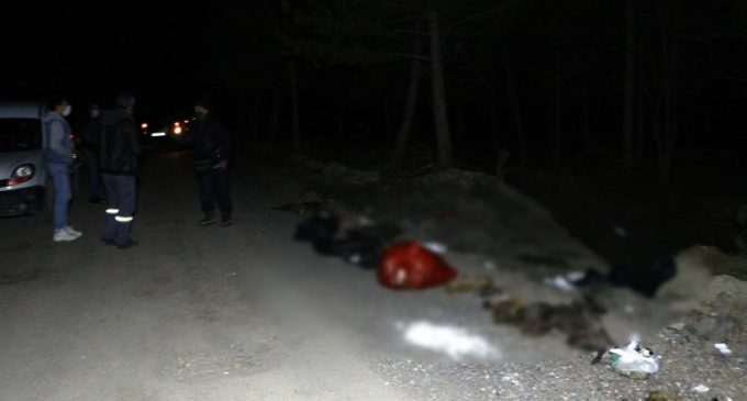 Ankara'da korkunç olay: Damar yolu açılmış 30'un üzerinde köpek ölüsü bulundu