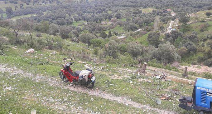 Sokağa çıkma yasağında ağaç katliamı: TOKİ için yüzlerce zeytin ağacı kesildi!