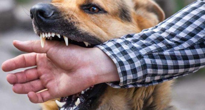 """ABD'den Türkiye'ye köpeklerde """"yüksek kuduz riski"""" kısıtlaması: Girişler askıya alındı"""