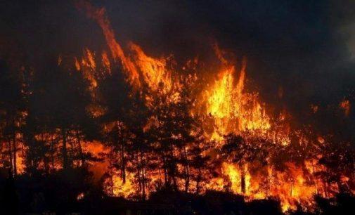 Samsun'da orman yangını: Yedi hektarlık alan zarar gördü