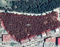 Rant belediyeciliği: AKP'li belediye, ormanlık alanı imara açtı