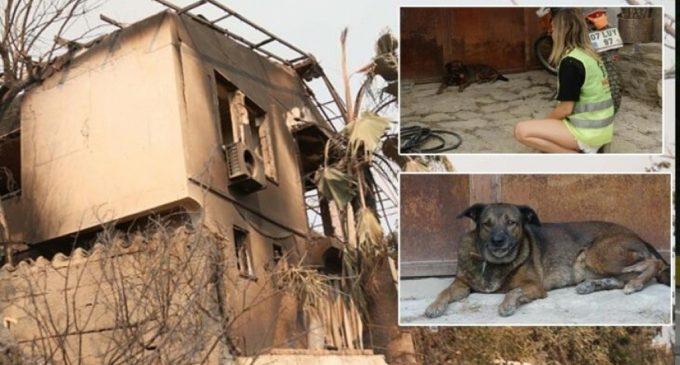 Manavgat'taki yangında yaşamını yitiren çiftin köpekleri evin önünden ayrılmıyor
