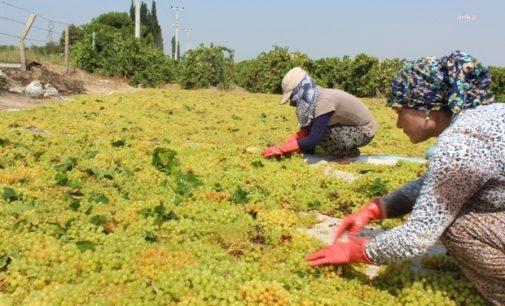"""Manisa'nın CHP'li vekillerinden Bakan'a """"üzüm"""" mektubu: 18 liranın altında olmayan bir fiyat açıklayın"""