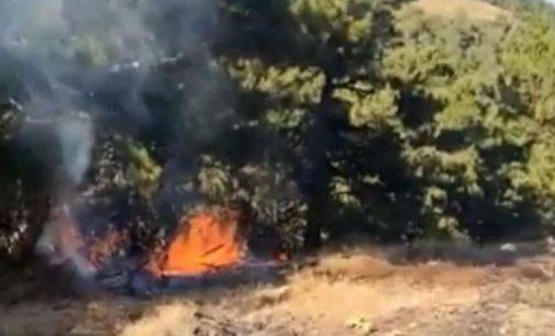 İzmir'de orman yangını: Müdahale sürüyor